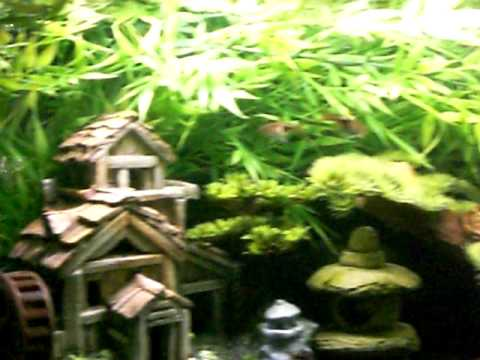 Oriental / Asian Theme Freshwater Aquarium Fish Tank - YouTube