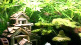 Oriental / Asian Theme Freshwater Aquarium Fish Tank