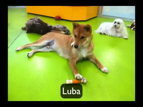whos new at my pet garden doggy daycare in pasadena ca - My Pet Garden