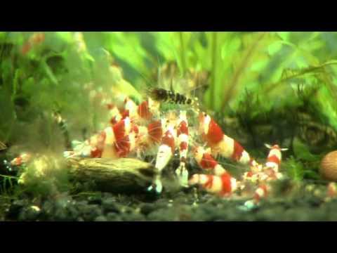 Lợi nhuận từ nuôi cá cảnh, sinh vật cảnh - Vui Sống Mỗi Ngày [VTV3 - 24.03.2014]