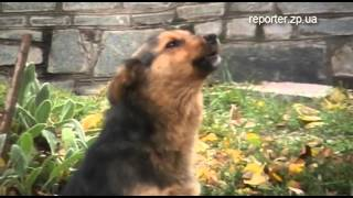 Поющие собаки КПУ