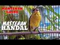 Mantenan Gacor Masteran Dan Pancingan Handal  Mp3 - Mp4 Download