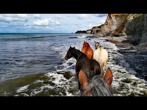 riding-expedition-on-the-island-of-tierra-del-fuego,-argentina.
