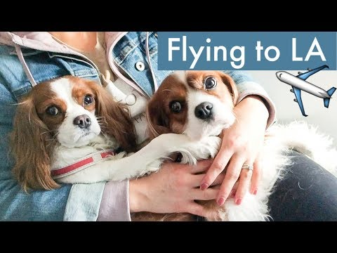FLYING TO LOS ANGELES WITH DOGS | Travel Vlog