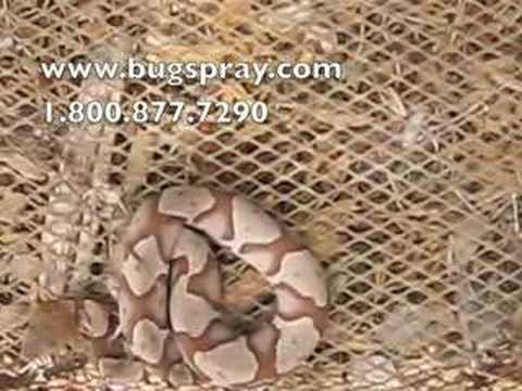 How to live trap a copperhead snake
