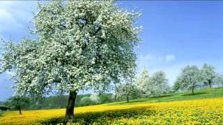 HARMONICA (MOUTH ORGAN) BENGALI MODERN SONGS BY ABHIJIT CHATTERJEE