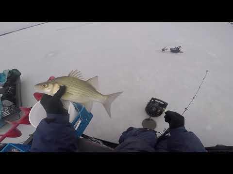 Ice Fishing Lake Poygan 1-3-20