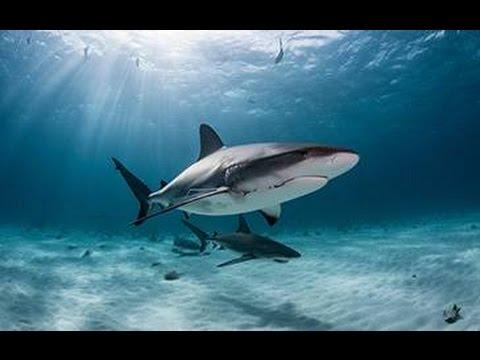 Plongée avec les requins de Durban (Afrique du Sud)