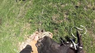 Paradise Helicopters Texas when pigs fly