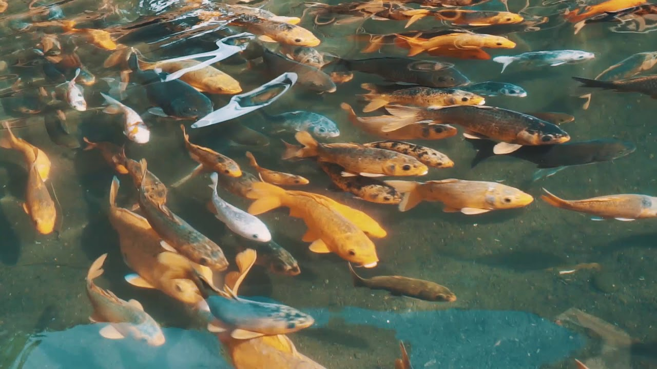 Desa Wisata Saung Ciburial Desa Sukalaksana Samarang Garut Youtube