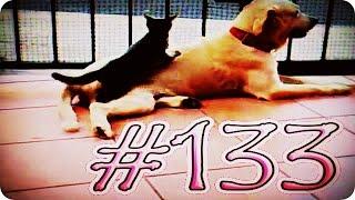 Приколы с животными №133   Кот делает массаж  Смешные животные  Animal videos