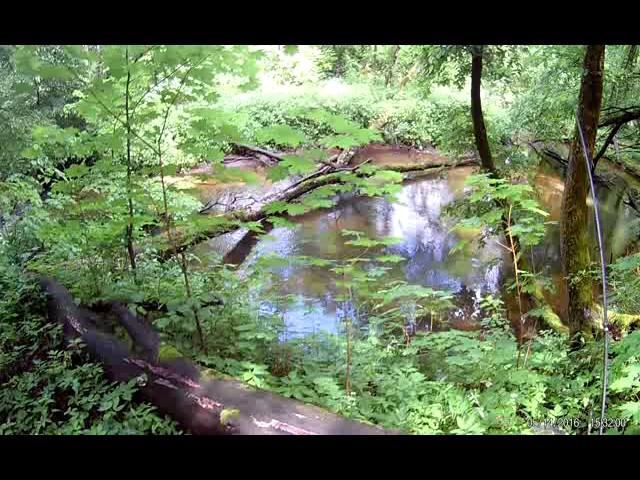 Гуляю вдоль ручья