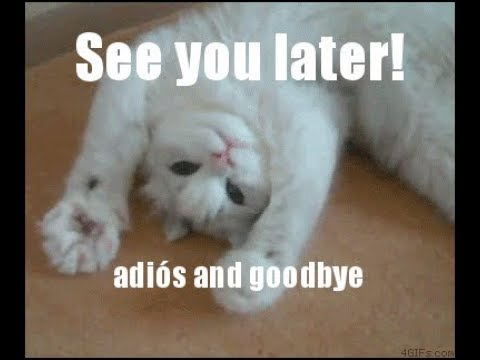 Image result for cat saying goodbye