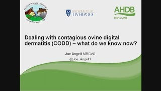 Webinar: Contagious Ovine Digital Dermatitis (CODD) in sheep - What do we know?""