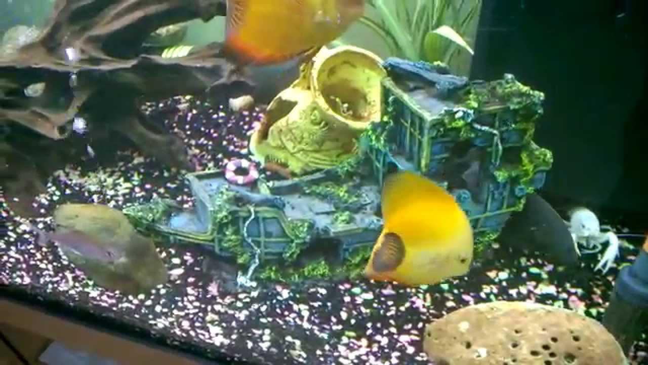 Poisson d 39 eau douce youtube for Aquarium 50l