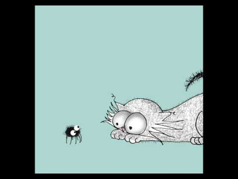 Spider meets Cat | Hello | Cat Don't Care