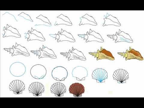 How To Draw A Seashell Step By Step Drawing Tutorial