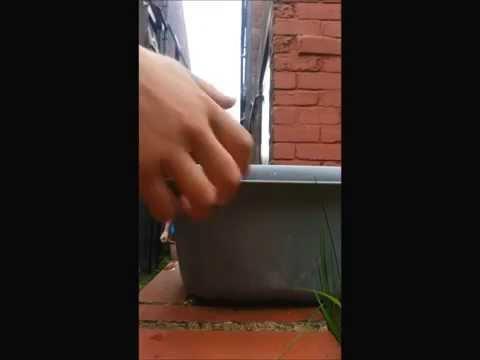 MNDA Ice Bucket Challenge/Pies for Parkinsons