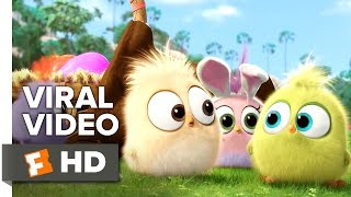 The Angry Birds Movie VIRAL VIDEO - Hatchling Easter (2016) - Animated Movie HD