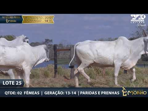 LOTE 25