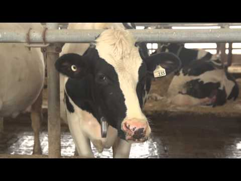 Local Milk Creates Jobs in London Ontario