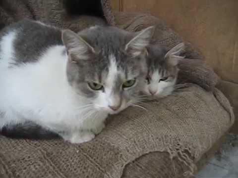 Кошка с котенком спят на собственном диванчике - YouTube