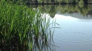 Download Замечательные звуки природы возле пруда  Лягушки в сочетании с птицами Mp3 and Videos