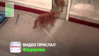 Котёнок увидел зеркало.