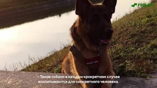 Собака-помощник: как собаки могут помогать инвалидам