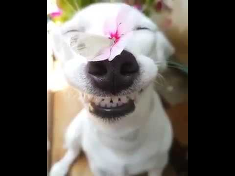 HAPPY DOG WITH FLOWER ON HER NOSE - YouTube - photo#11