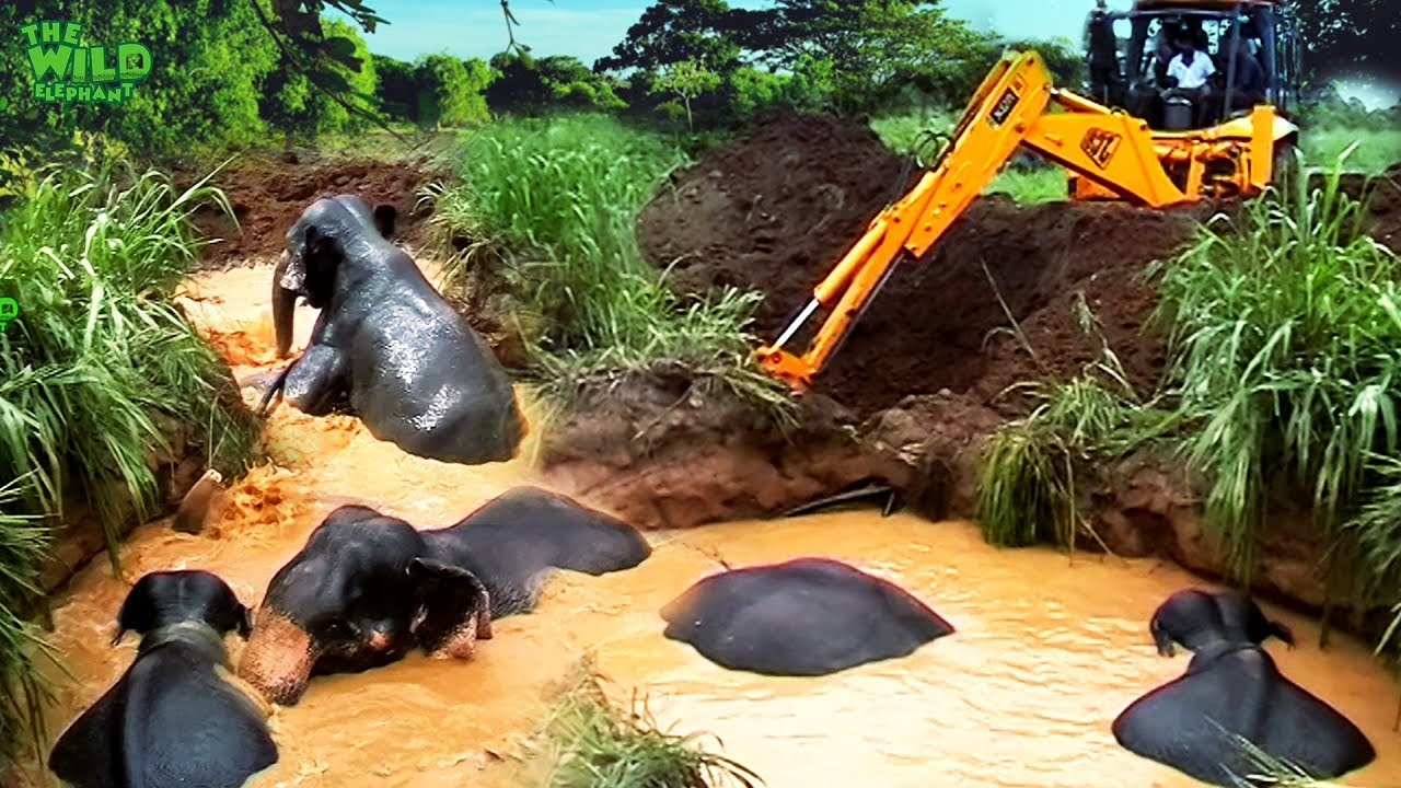 Drowning elephants saved from a muddy well