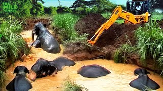 Фото Drowning Elephants Saved From A Muddy Well
