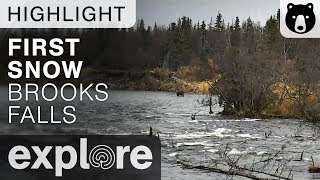 First Snow at Brooks Falls - Brown Bears Live Cam Highlight 10/18/17
