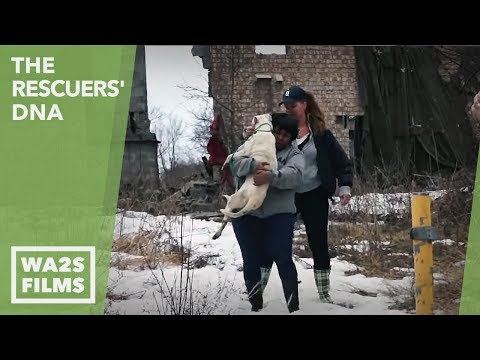 Dog Abandoned & Freezing Rescued from Dog Fighting in Detroit Ep 3 The Rescuers DNA