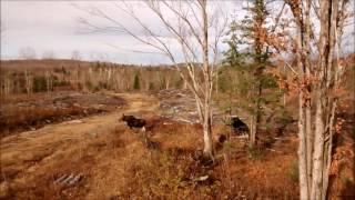 Moose 2016