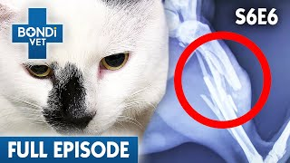 😿 Cat Desperately Needs Surgery | S06E06 | Bondi Vet