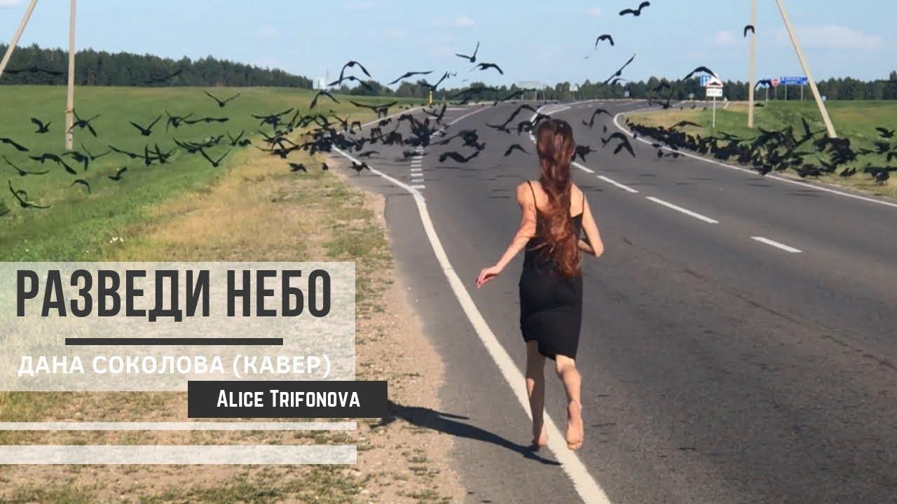 🔥РАЗВЕДИ НЕБО - Дана Соколова (кавер) || Алиса Трифонова