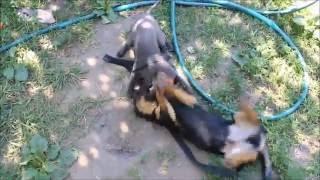 ОСТОРОЖНО! Во дворе злая собака, а кот вообще дебил))