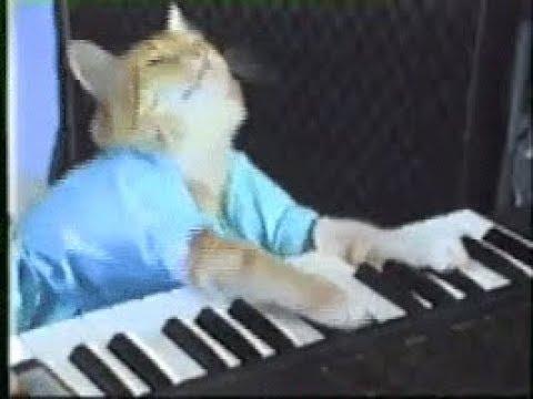Кот играет на пианино гифка