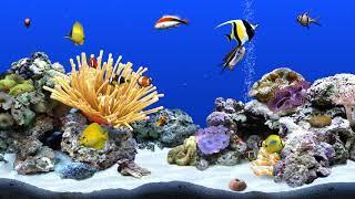 Digifish ClownfishTank 2 (4K)