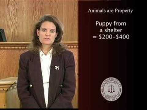 Animal Rights Facts: Animals are Property