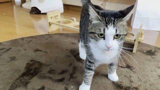 警戒感MAXで娘に駆け寄る猫