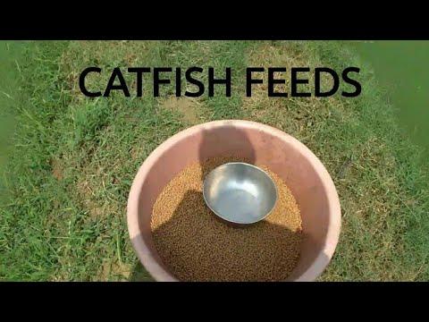 Feeding Catfish fish in India | Magur Fish Farming in India - Gaurav's  Fisheries