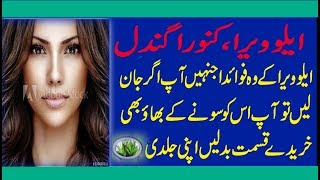 Gambar cover Aloe Vera Plants: Best Tips for Growing & Care check detail in urdu hindi