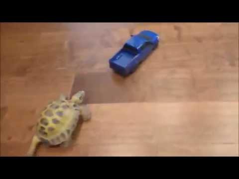 черепаха — новые прикольные фото, анекдоты, видео, посты