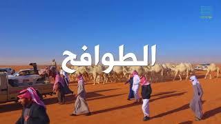 مسيرة الطوافح لمالك الابل المعروف نايف بن نماس السميري 5-5-1439هـ تصوير قناة فيافي