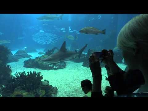 Lisbon Oceanarium - it's Amazing!