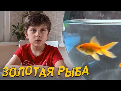 Вопрос: Откуда родом Золотая рыбка?