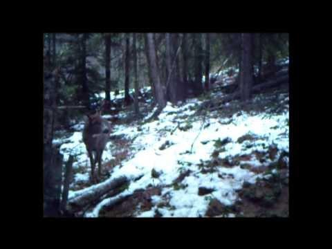 2012 B.C. Big Buck Whitetail Hunt