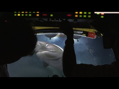 Sharks Attack Submarine - Blue Planet II Behind The Scenes